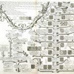 Spain-Genealogy--F6-14-6